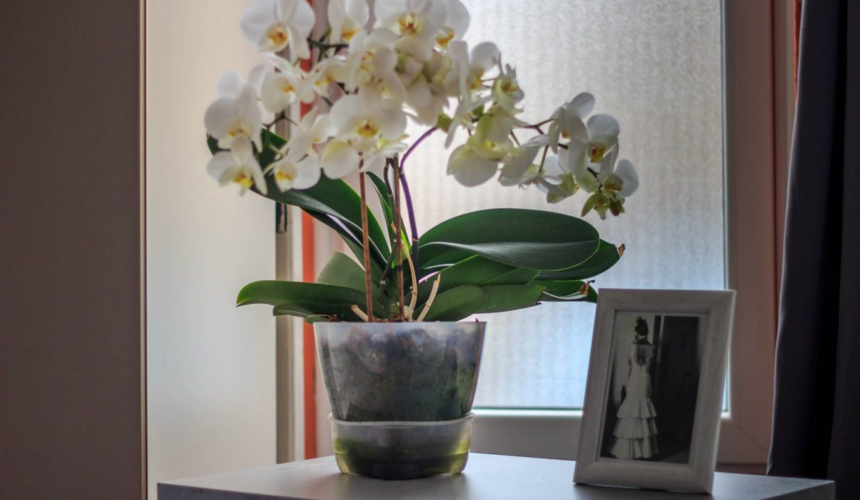 bela-strela-bajina-basta (15)