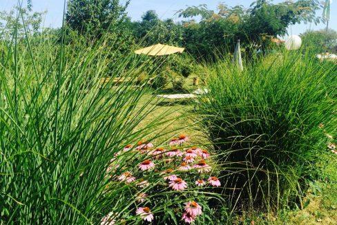 morava-garden (6)