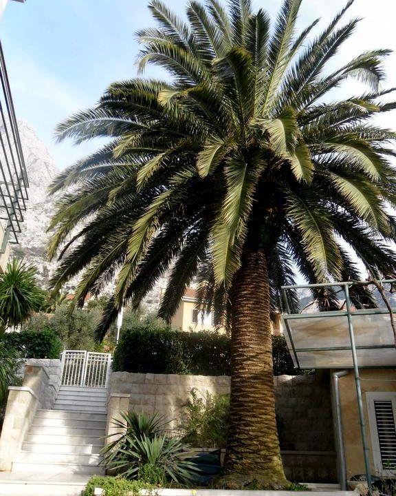 apartmani-palma-kotor (4)