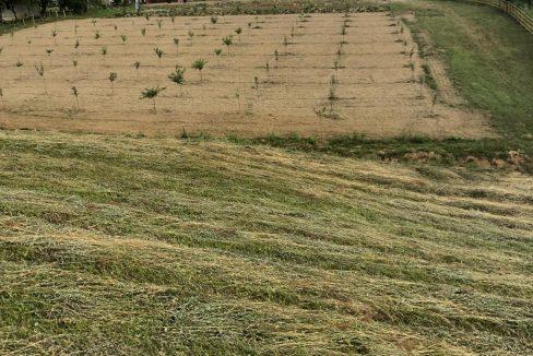 drveno-imanje-vrnjacka-banja (10)